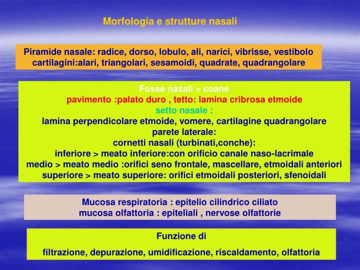 Morfologia e strutture nasali