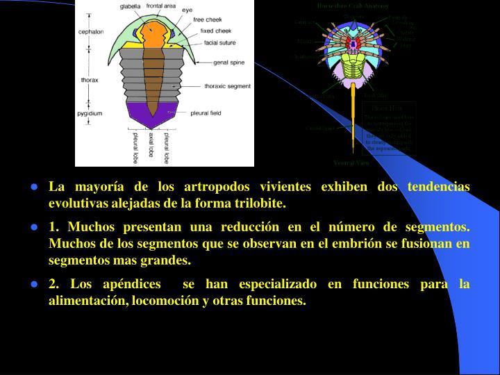 La mayoría de los artropodos vivientes exhiben dos tendencias evolutivas alejadas de la forma trilobite.