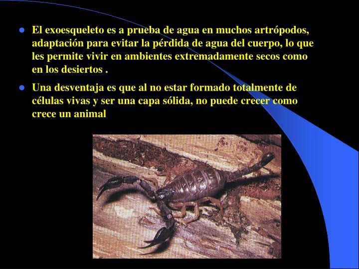 El exoesqueleto es a prueba de agua en muchos artrópodos, adaptación para evitar la pérdida de agua del cuerpo, lo que les permite vivir en ambientes extremadamente secos como en los desiertos .