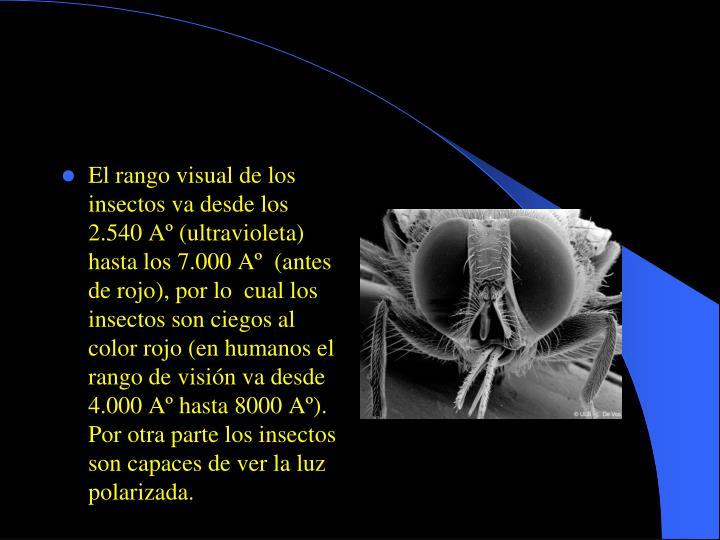 El rango visual de los insectos va desde los 2.540 Aº (ultravioleta) hasta los 7.000 Aº (antes de rojo), por lo cual los insectos son ciegos al color rojo (en humanos el rango de visión va desde 4.000 Aº hasta 8000 Aº). Por otra parte los insectos son capaces de ver la luz polarizada.