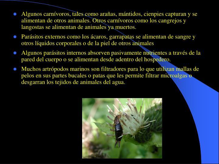 Algunos carnívoros, tales como arañas, mántidos, cienpies capturan y se alimentan de otros animales. Otros carnívoros como los cangrejos y langostas se alimentan de animales ya muertos.