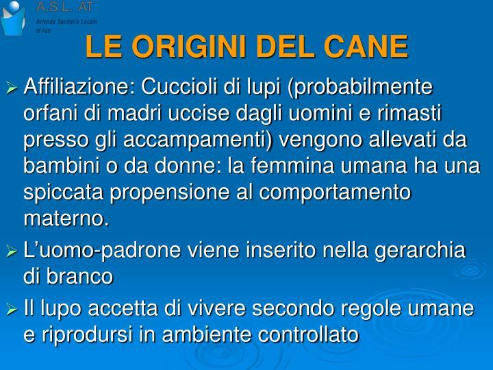 LE ORIGINI DEL CANE