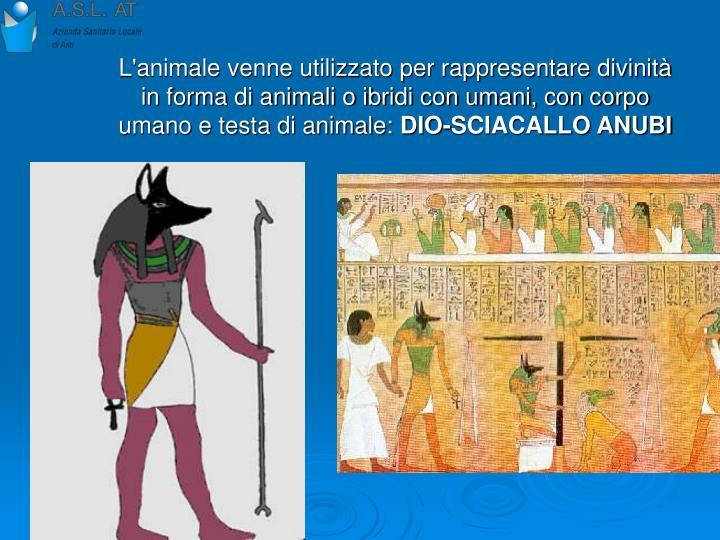 L'animale venne utilizzato per rappresentare divinità