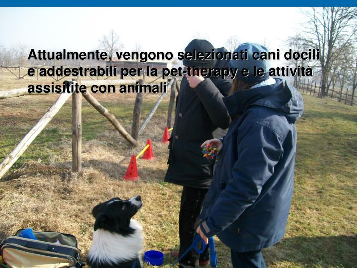 Attualmente, vengono selezionati cani docili e addestrabili per la pet-therapy e le attività assisitite con animali