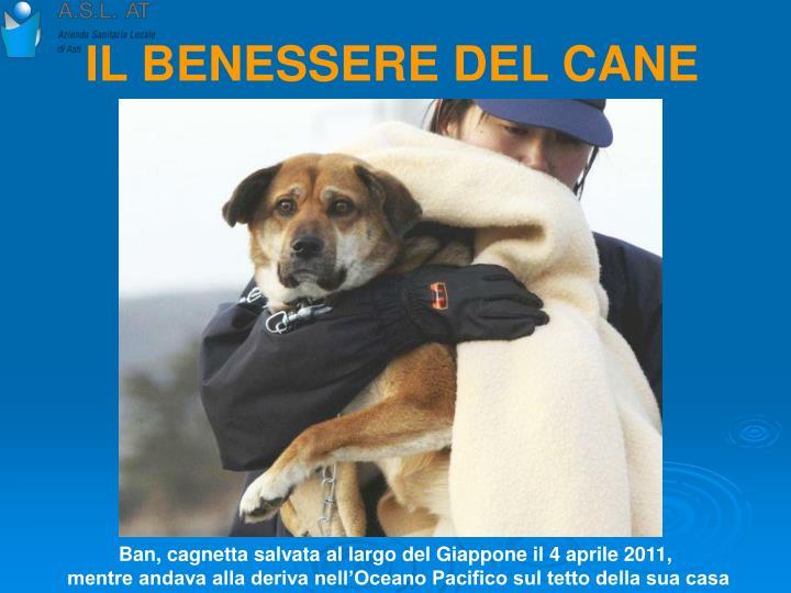 IL BENESSERE DEL CANE