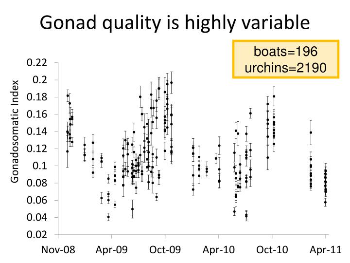Gonad quality is highly variable