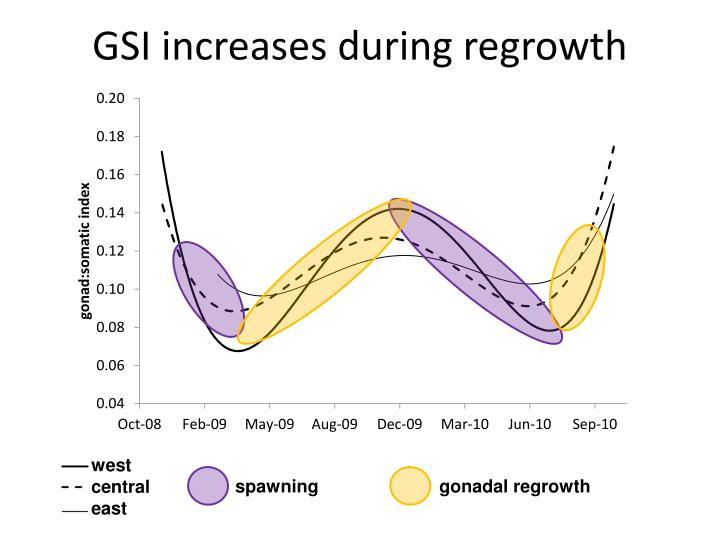 GSI increases during regrowth