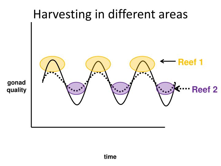 Harvesting in different areas