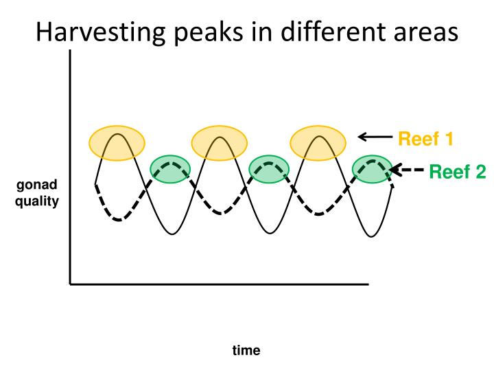 Harvesting peaks in different areas