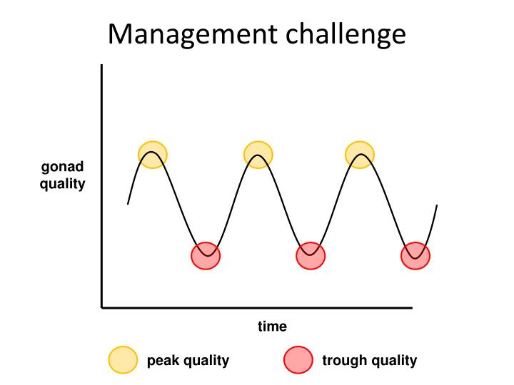 Management challenge