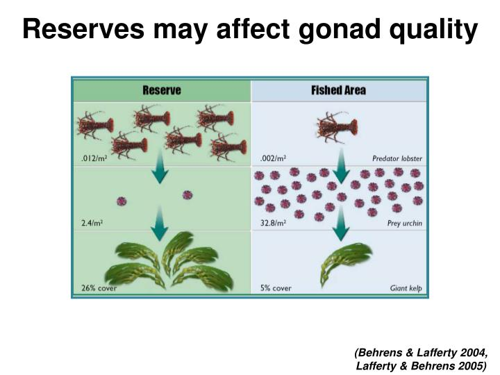 Reserves may affect gonad quality