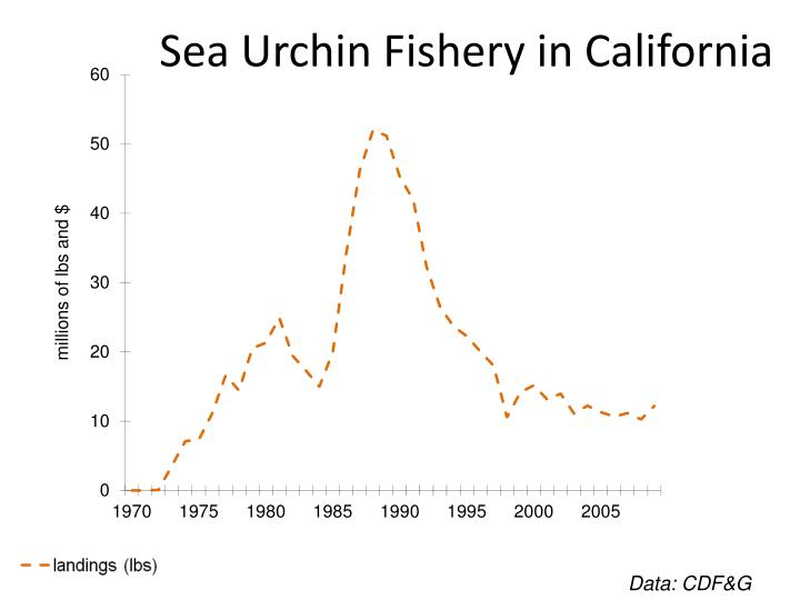 Sea Urchin Fishery in California