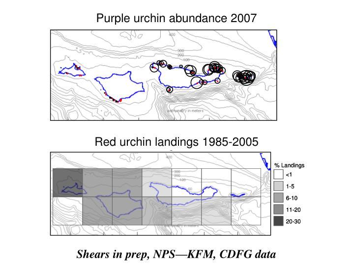Purple urchin abundance 2007