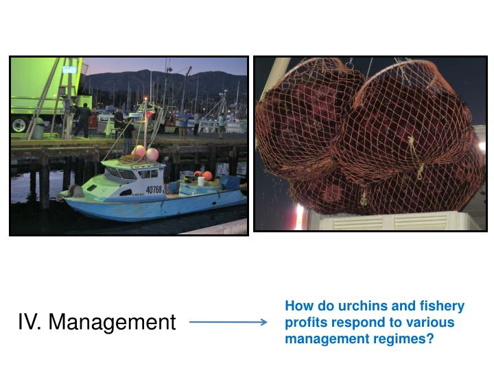 How do urchins and fishery profits respond to various management regimes?