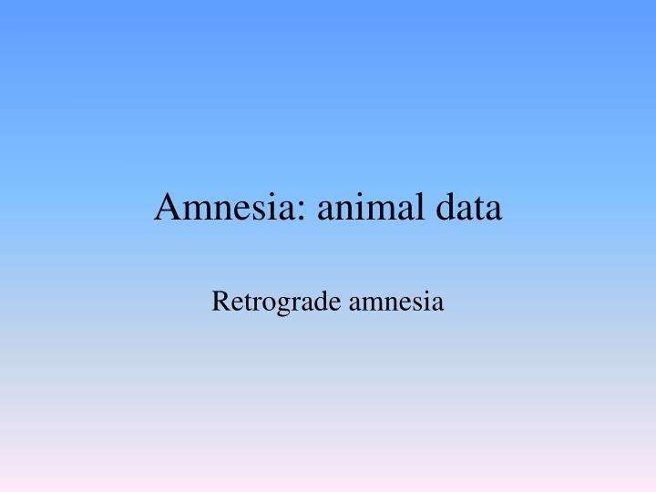 Amnesia: animal data