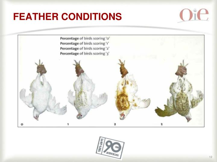 FEATHER CONDITIONS