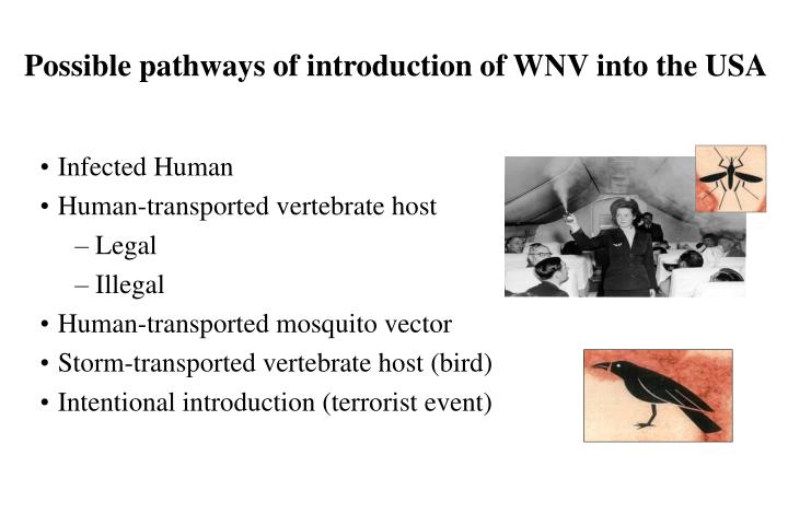 Possible pathways of introduction of WNV into the USA