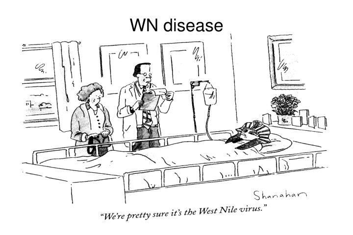 WN disease