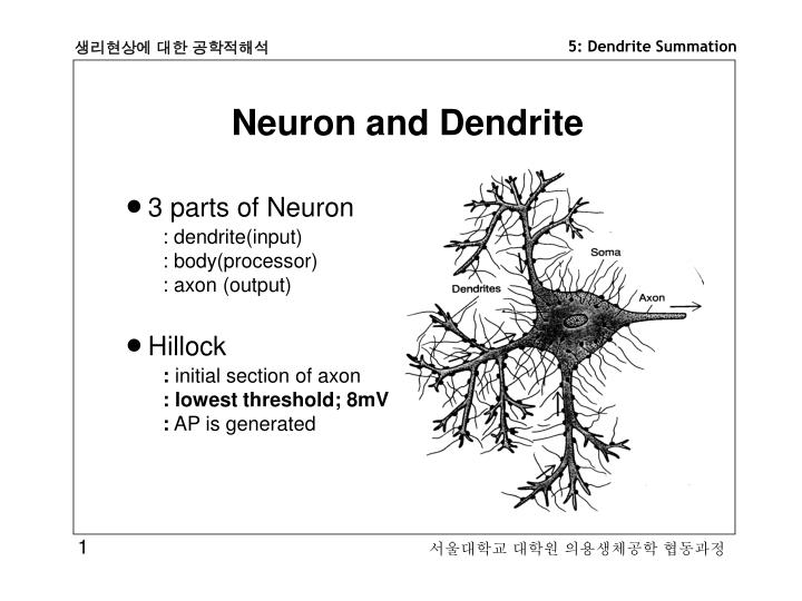 Neuron and Dendrite