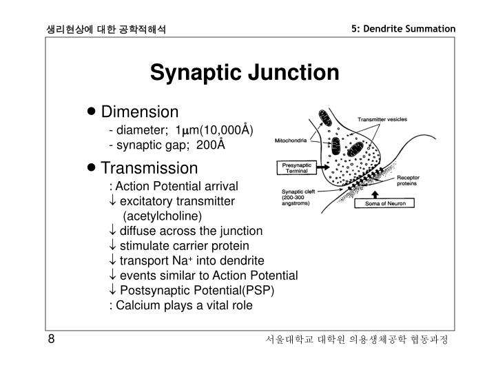 Synaptic Junction