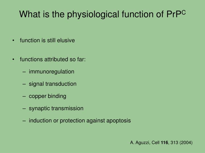 What is the physiological function of PrP