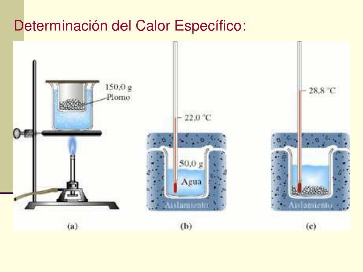 Determinación del Calor Específico: