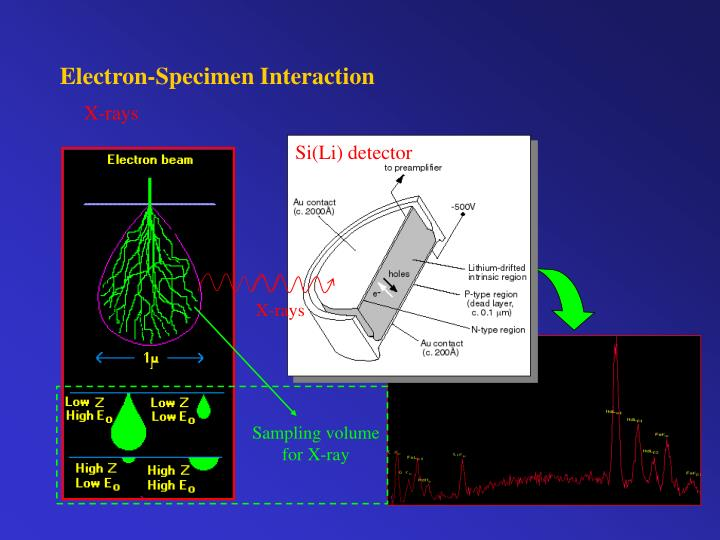 Electron-Specimen Interaction