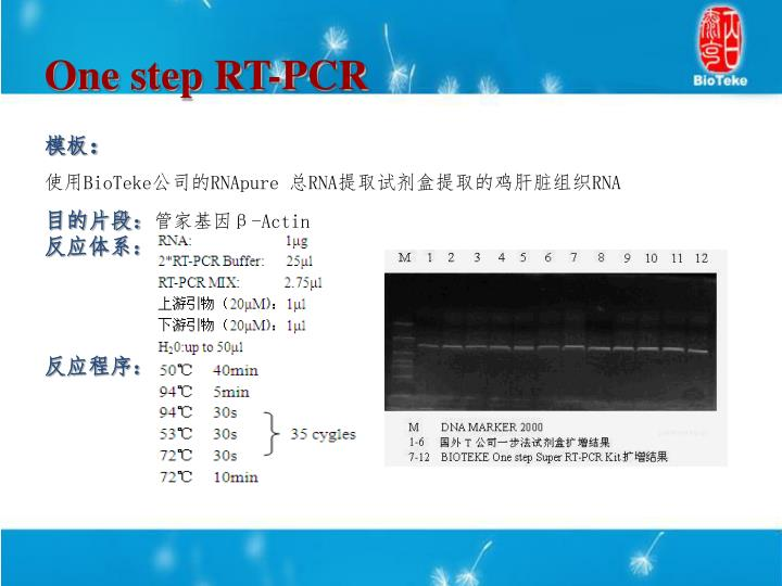 One step RT-PCR