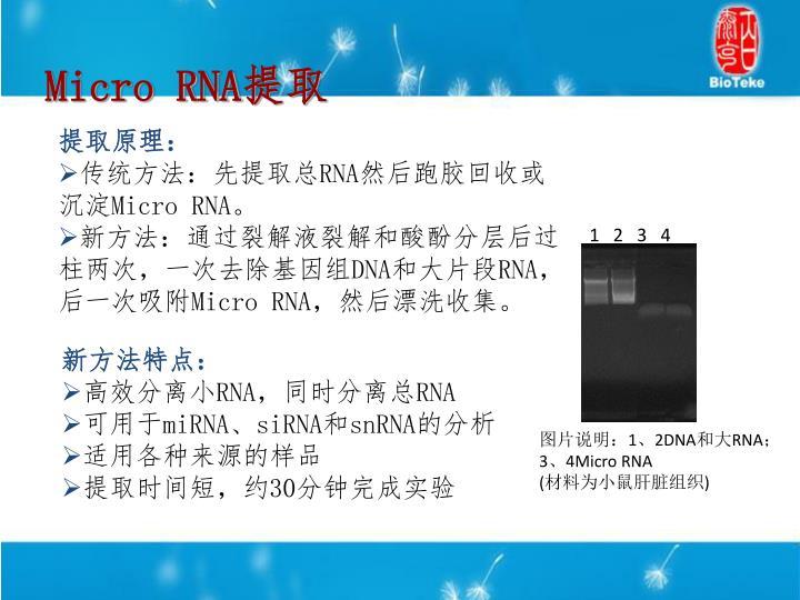 Micro RNA
