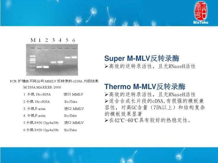 Super M-MLV