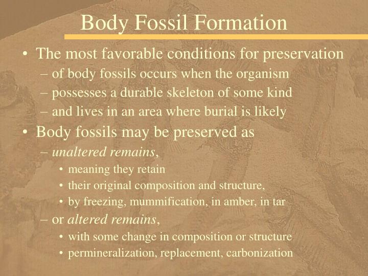 Body Fossil Formation