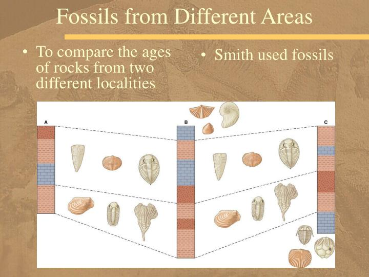 Fossils from Different Areas