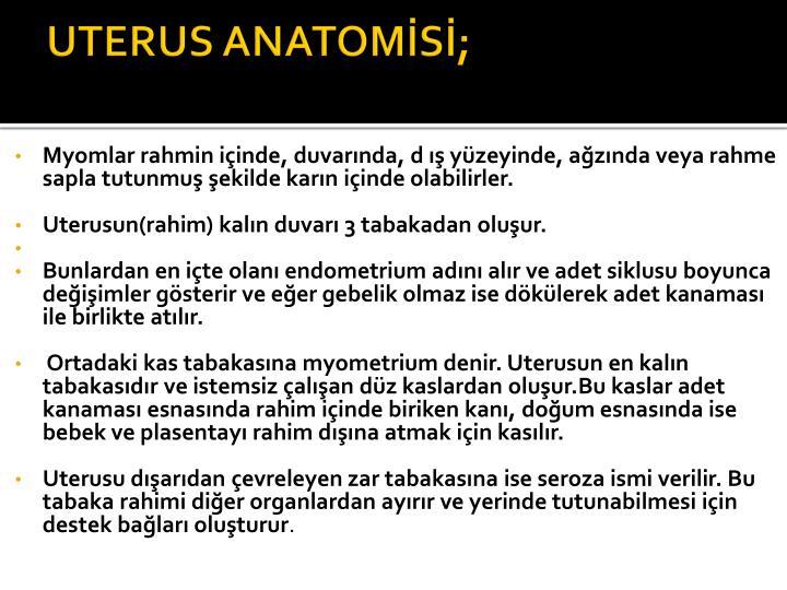 UTERUS ANATOMİSİ;