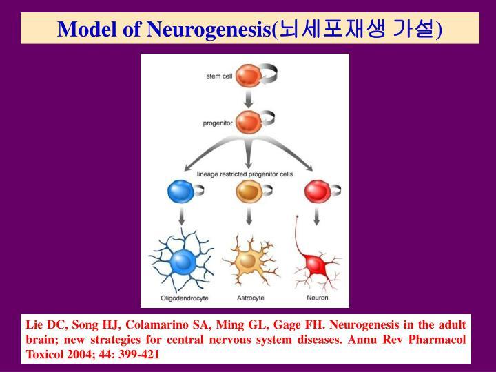 Model of Neurogenesis(