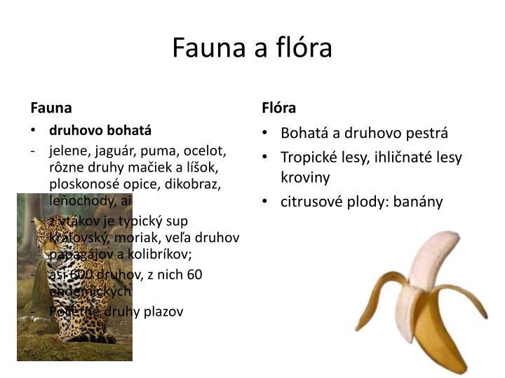 Fauna a flóra
