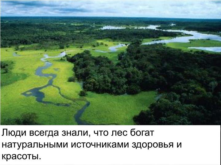 Люди всегда знали, что лес богат натуральными источниками здоровья и красоты
