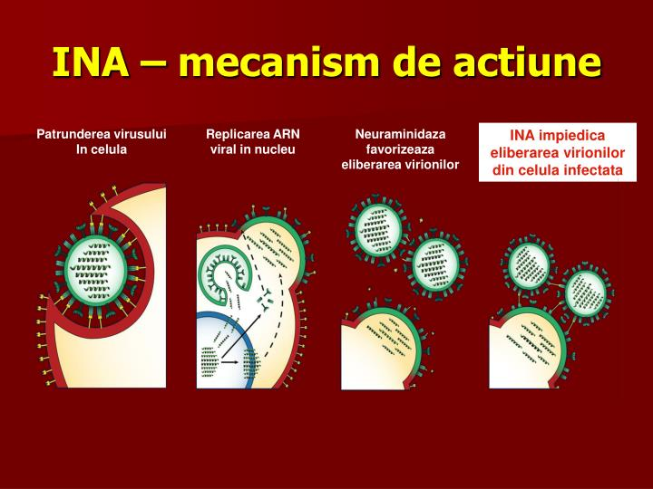 INA – mecanism de actiune