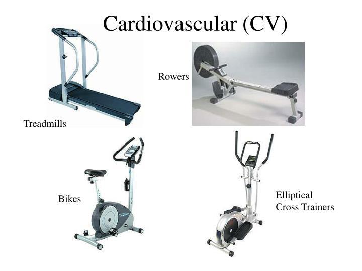 Cardiovascular (CV)