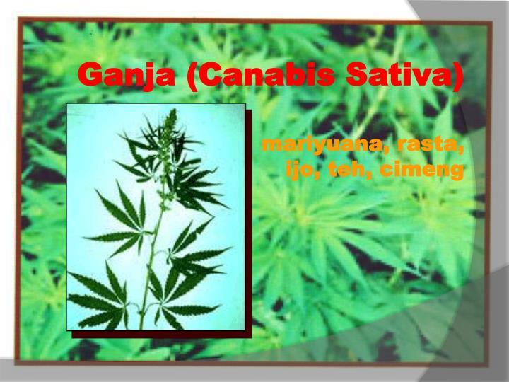 Ganja (Canabis Sativa)