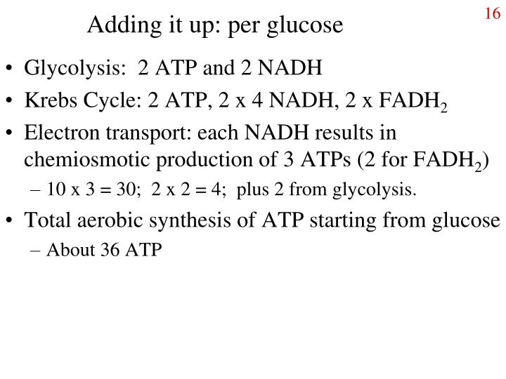 Adding it up: per glucose