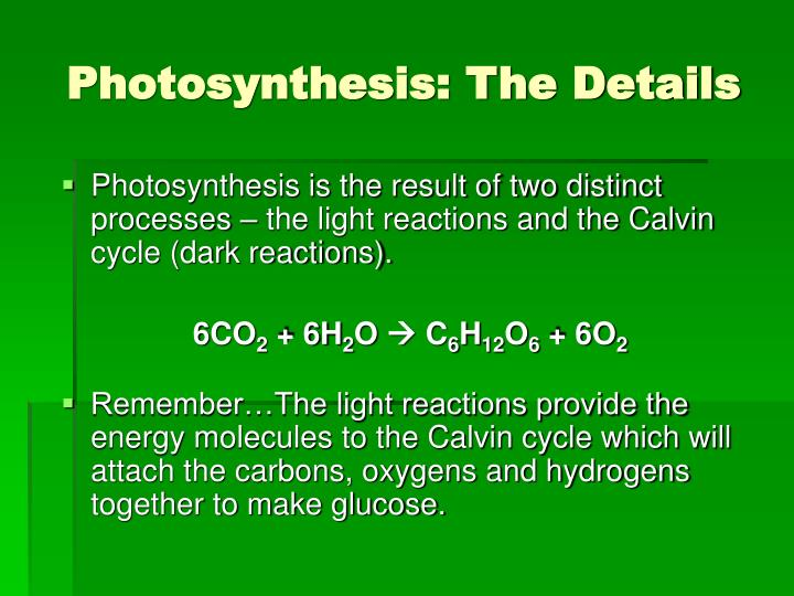 Photosynthesis: The Details
