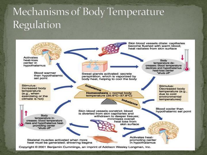 Mechanisms of Body Temperature Regulation