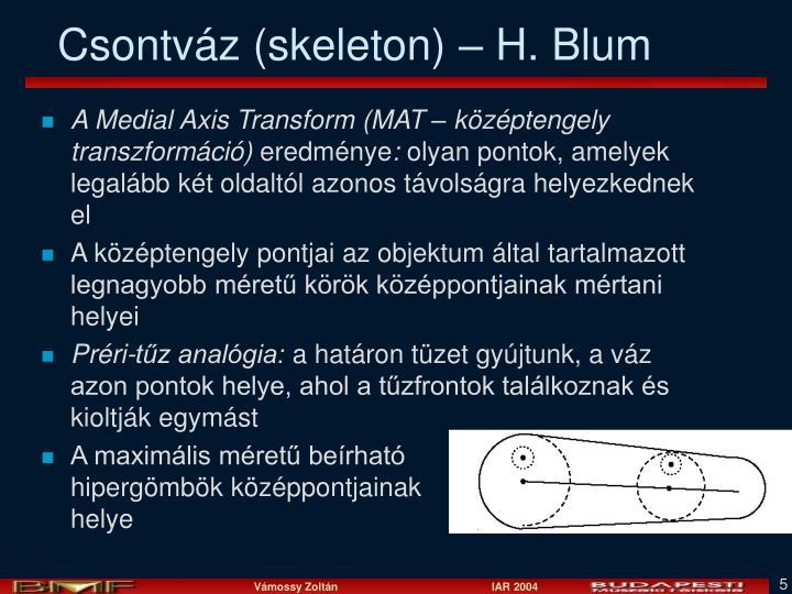 Csontváz (skeleton) – H. Blum
