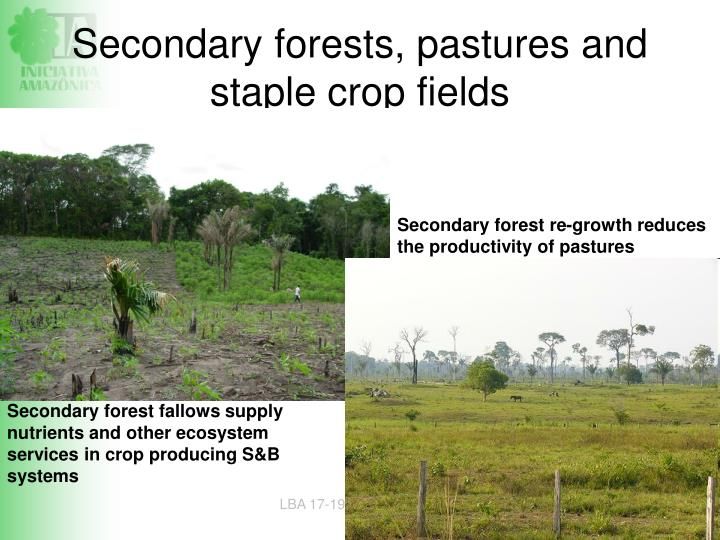 Secondary forests, pastures and staple crop fields