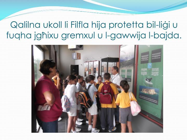 Qalilna ukoll li Filfla hija protetta bil-liġi u fuqha jgħixu gremxul u l-gawwija l-bajda.