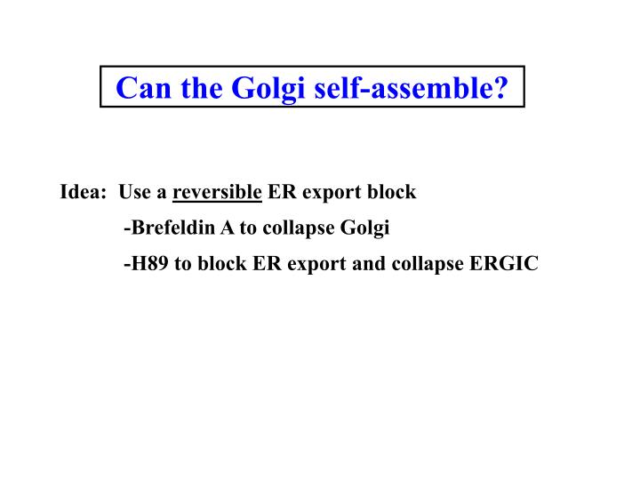 Can the Golgi self-assemble?