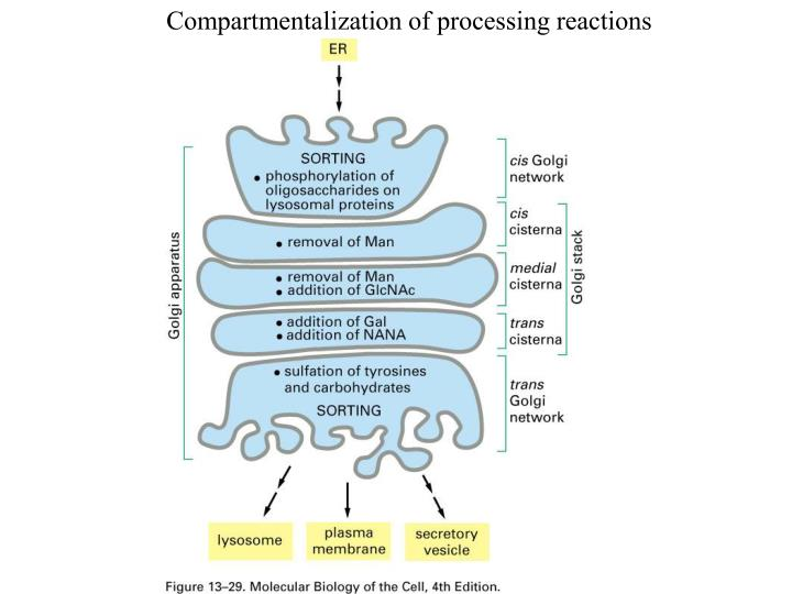Compartmentalization of processing reactions