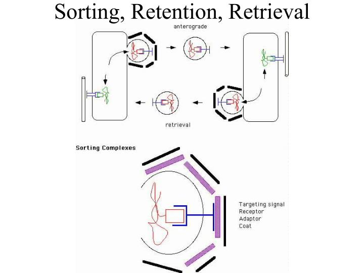Sorting, Retention, Retrieval