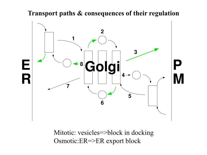 Transport paths & consequences of their regulation
