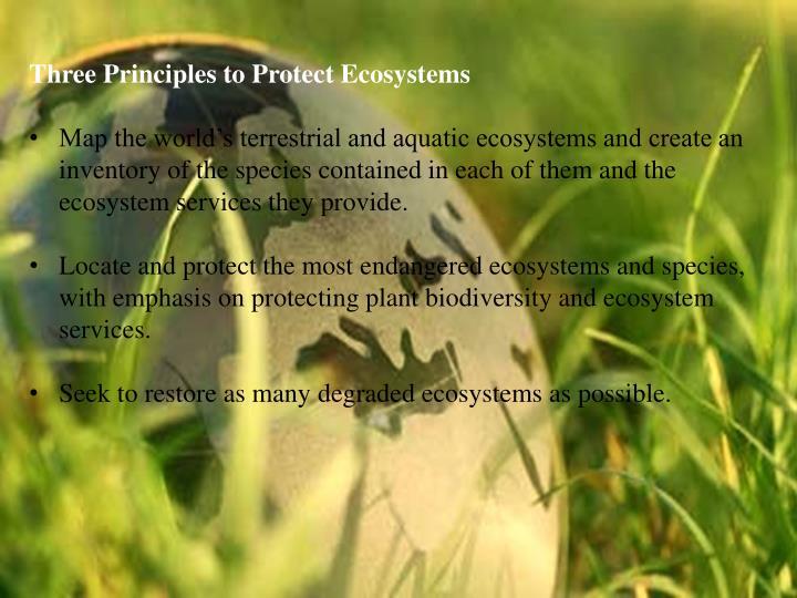 Three Principles to